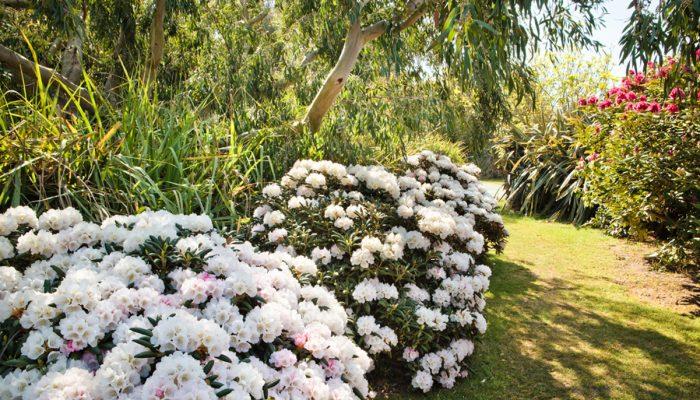 Jardin botanique Vauville